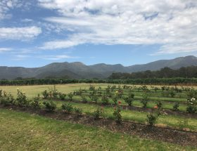 Hunter Valley Wine